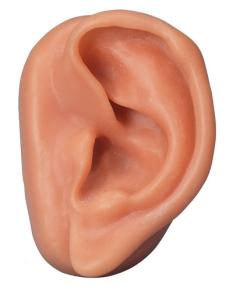 el oído es comparado al don de profecía