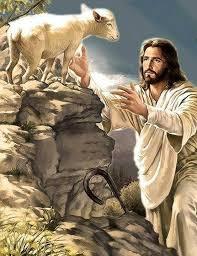 oveja confiada