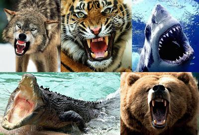 Resultado de imagen para imagenes de animales que atacan